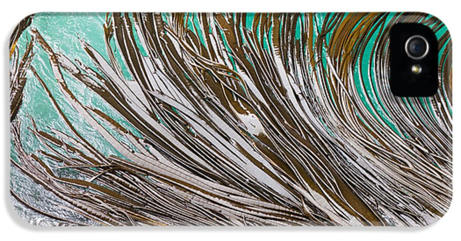 Abstract IPhone 5 Case featuring the photograph Bull Kelp Blades On Surface Background Texture by Stephan Pietzko