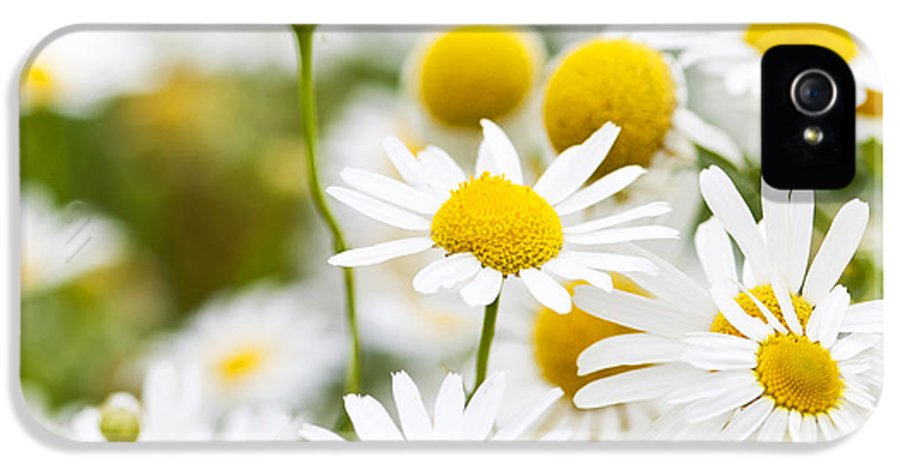 Chamomile IPhone 5 / 5s Case featuring the photograph Chamomile Flowers by Elena Elisseeva