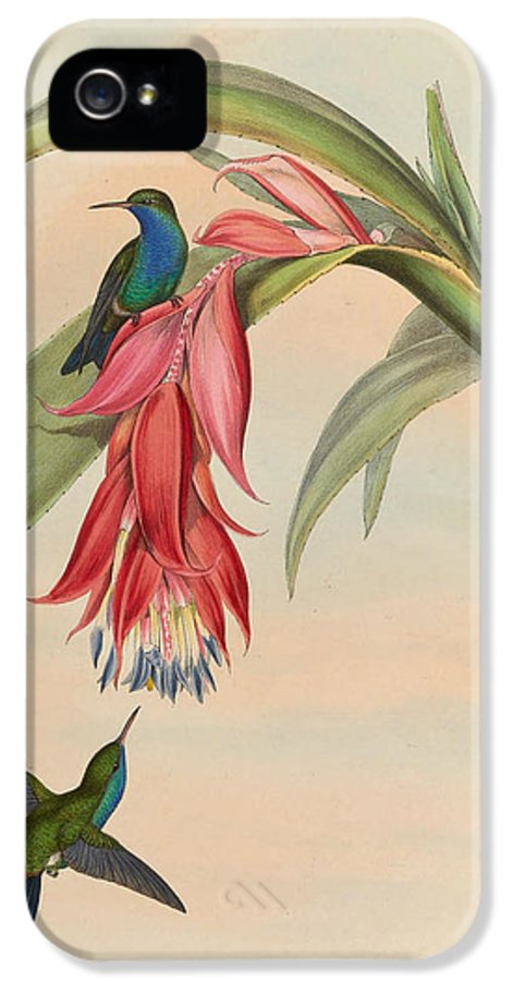 Hummingbirds IPhone 5 Case featuring the painting Hummingbirds by Philip Ralley