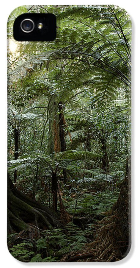 Morning IPhone 5 Case featuring the photograph Jungle by Les Cunliffe