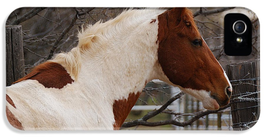 Wild IPhone 5 Case featuring the photograph Paint Stallion by Thea Wolff