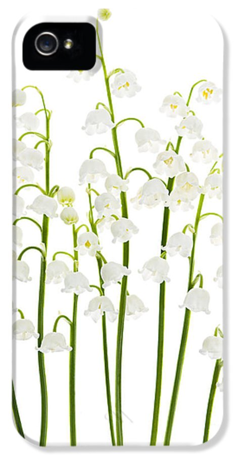 Flower IPhone 5 Case featuring the photograph Lily-of-the-valley Flowers by Elena Elisseeva