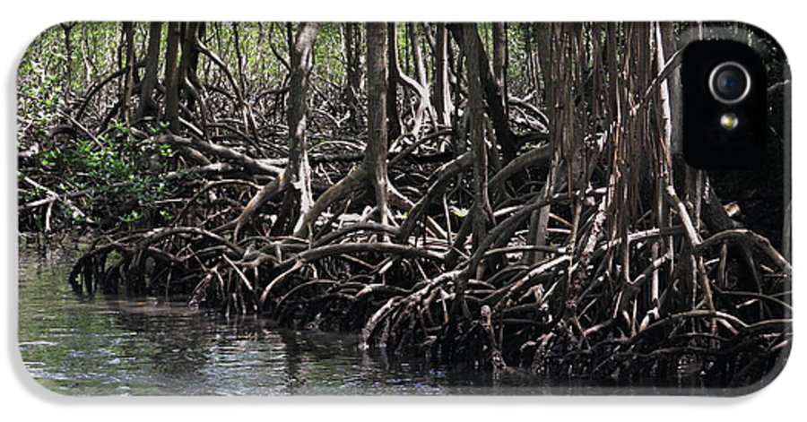 Archaeology IPhone 5 Case featuring the photograph Mangrove Forest In Los Haitises National Park Dominican Republic by Andrei Filippov