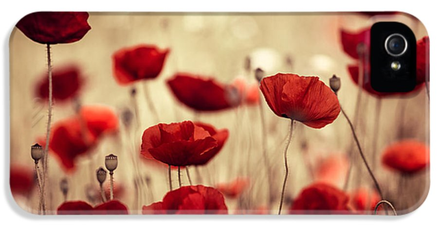 Poppy IPhone 5 Case featuring the photograph Summer Poppy by Nailia Schwarz