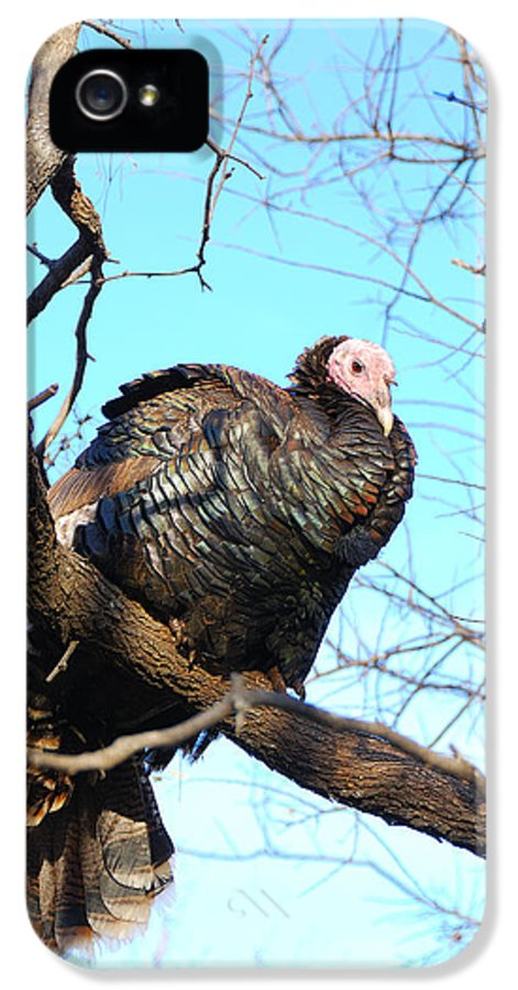 Wild IPhone 5 Case featuring the photograph Wild Turkey by Thea Wolff