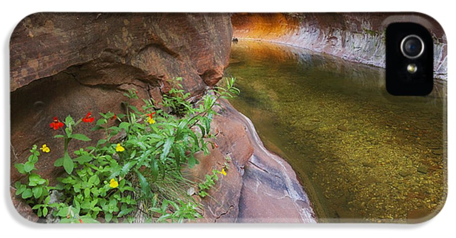 West Fork Oak Creek Canyon IPhone 5 Case featuring the photograph A Frogs Rest by Peter Coskun