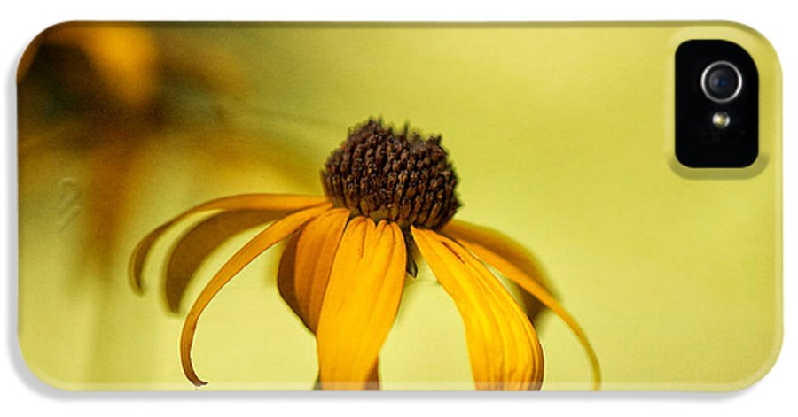 Black Eyed Susan IPhone 5 Case featuring the photograph A Gift From August by Lois Bryan
