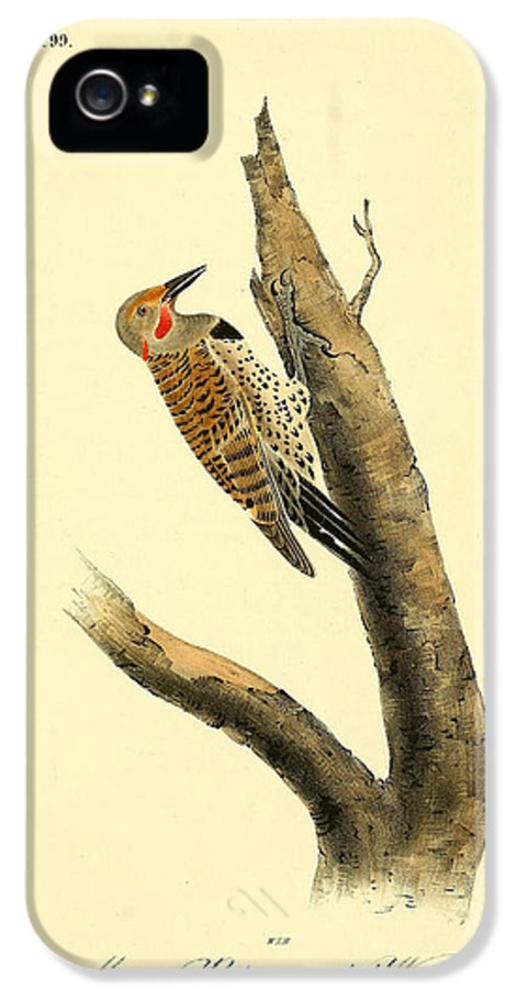 Audubon IPhone 5 Case featuring the painting A Red Moustached Woodpecker by Philip Ralley