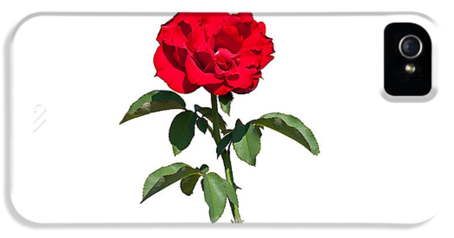 Flower IPhone 5 Case featuring the photograph A Red Rose On White by John M Bailey