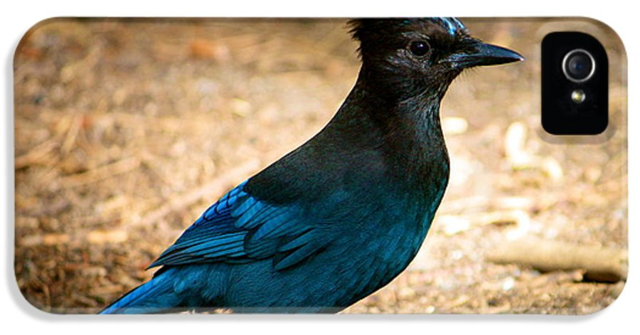 Stellar Jay IPhone 5 Case featuring the photograph A Stellar Jay by Lisa Billingsley