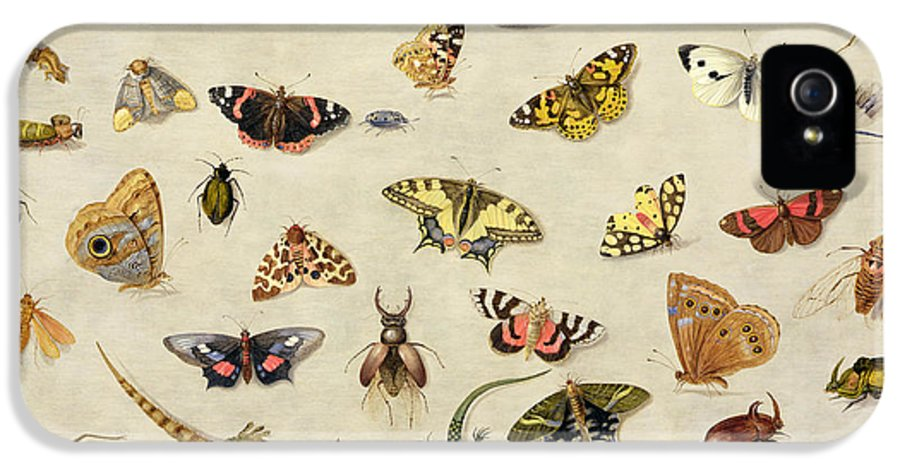 Collection IPhone 5 Case featuring the painting A Study Of Insects by Jan Van Kessel