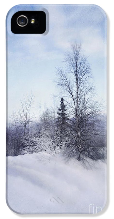 Birch IPhone 5 Case featuring the photograph A Tree In The Cold by Priska Wettstein