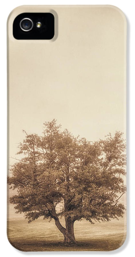 Tree IPhone 5 Case featuring the photograph A Tree In The Fog by Scott Norris