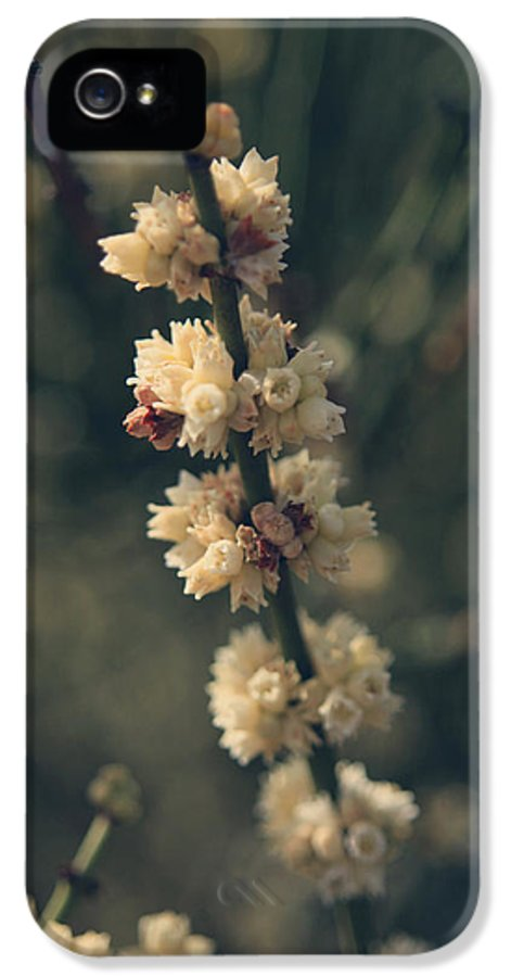 Berkeley Botanical Gardens IPhone 5 Case featuring the photograph A Wish For You by Laurie Search