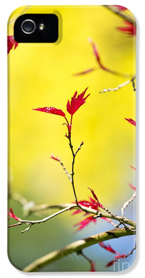 Acer IPhone 5 Case featuring the photograph Acer Colour by Tim Gainey