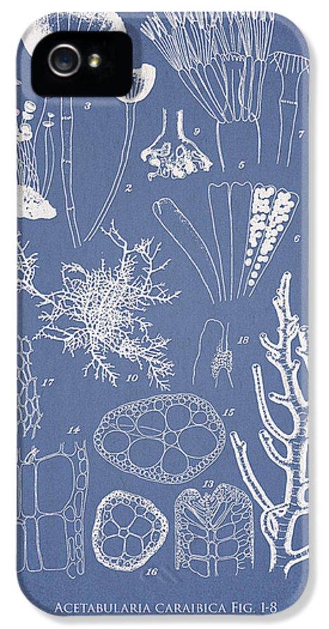 Algae IPhone 5 Case featuring the digital art Acetabularia Caraibica And Chondria Intricata by Aged Pixel