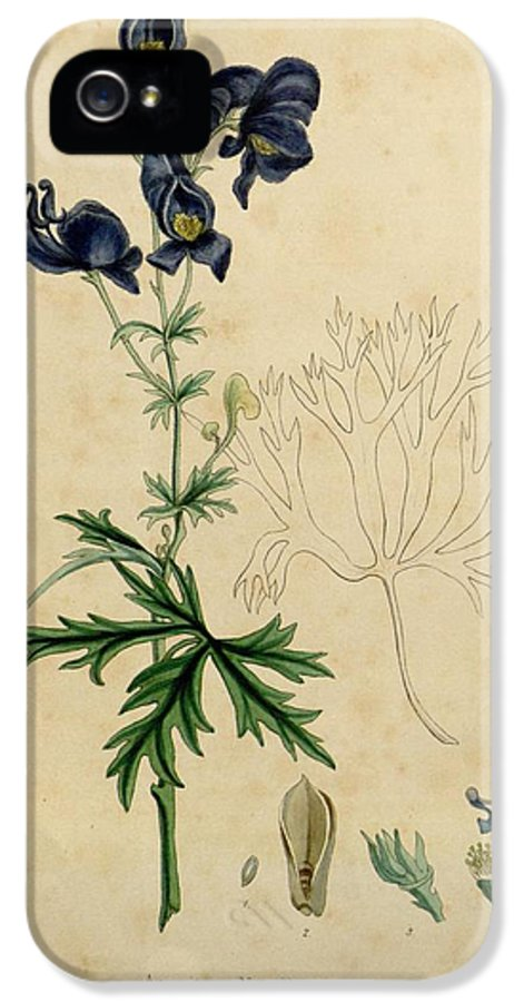 Aconitum IPhone 5 Case featuring the painting Aconitum Napellus By Sowerby by Philip Ralley