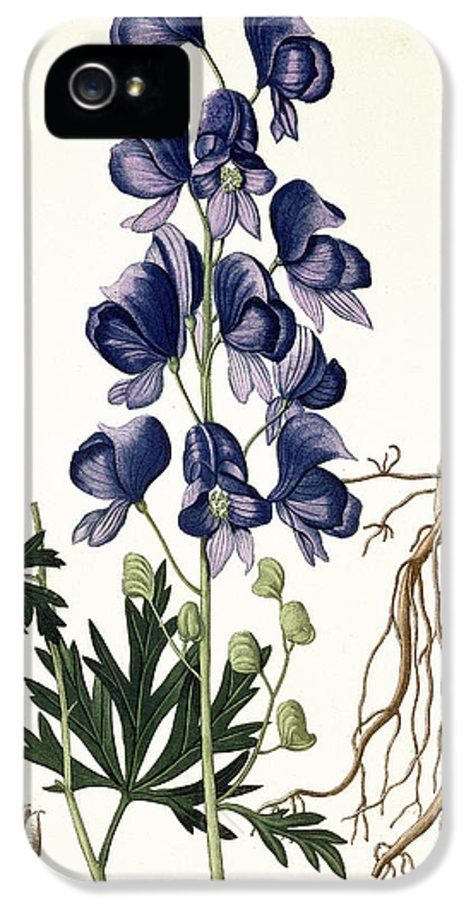 Floral IPhone 5 Case featuring the painting Aconitum Napellus by LFJ Hoquart