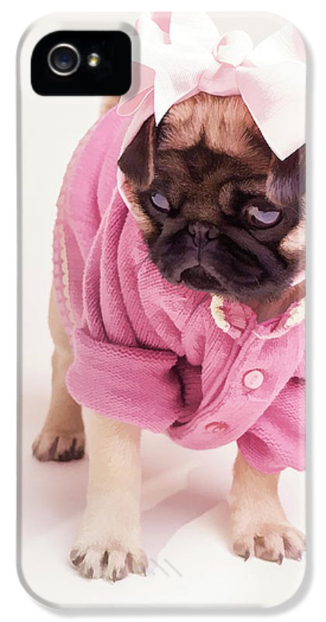 Pug Puppy Pink Bow Sweater Dog Doggie Puppies Dogs IPhone 5 / 5s Case featuring the photograph Adorable Pug Puppy In Pink Bow And Sweater by Edward Fielding