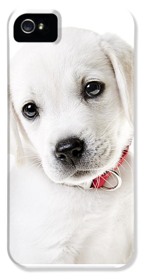 Puppy IPhone 5 Case featuring the photograph Adorable Yellow Lab Puppy by Diane Diederich