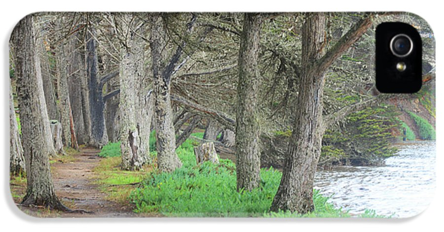 Trees IPhone 5 Case featuring the photograph After High Tide by Kris Hiemstra
