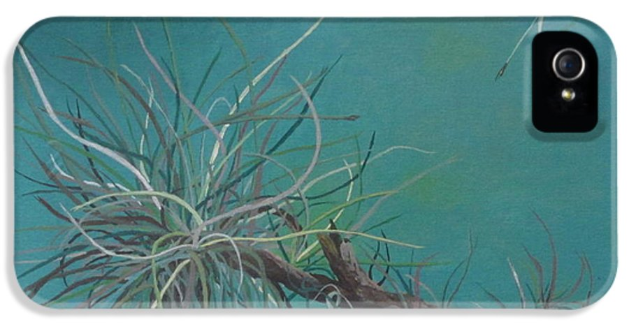 Air Plant IPhone 5 Case featuring the painting Air Plant Study by Hilda and Jose Garrancho