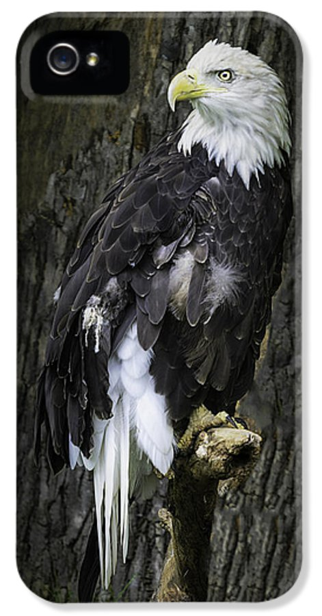 Bird IPhone 5 Case featuring the photograph American Bald Eagle by LeeAnn McLaneGoetz McLaneGoetzStudioLLCcom