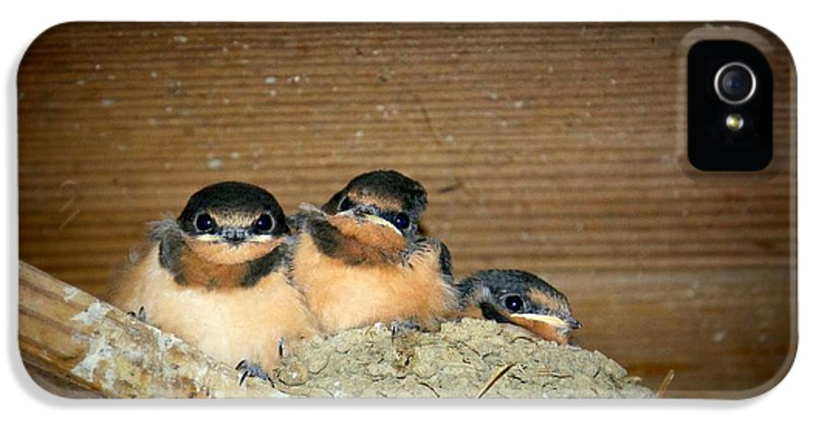 Baby Barn Swallows Almost Ready For Flight IPhone 5 Case featuring the photograph Angry Birds by Leah VanHoose