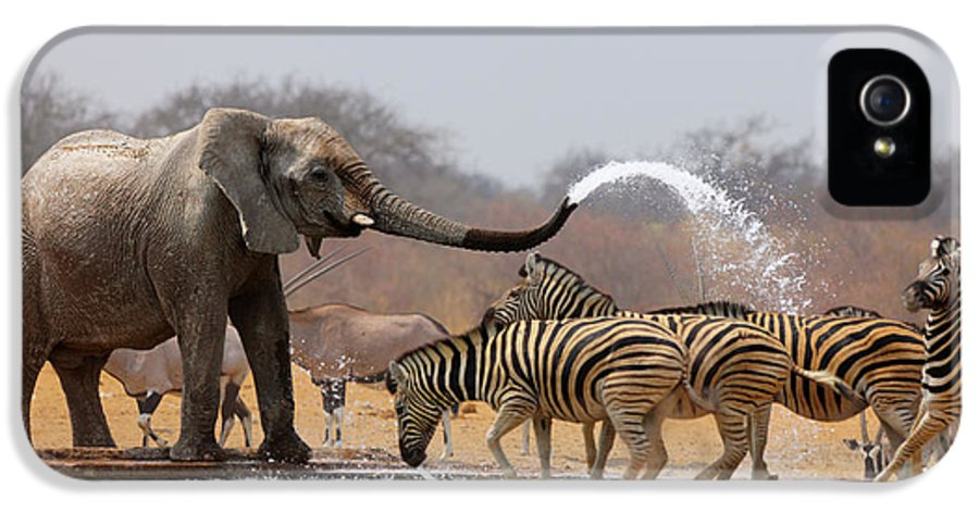 Funny IPhone 5 Case featuring the photograph Animal Humour by Johan Swanepoel