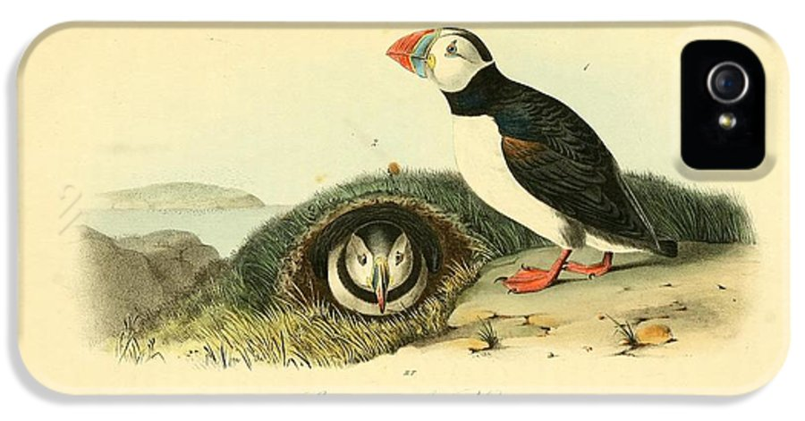 Audubon IPhone 5 Case featuring the painting Arctic Puffin by Philip Ralley