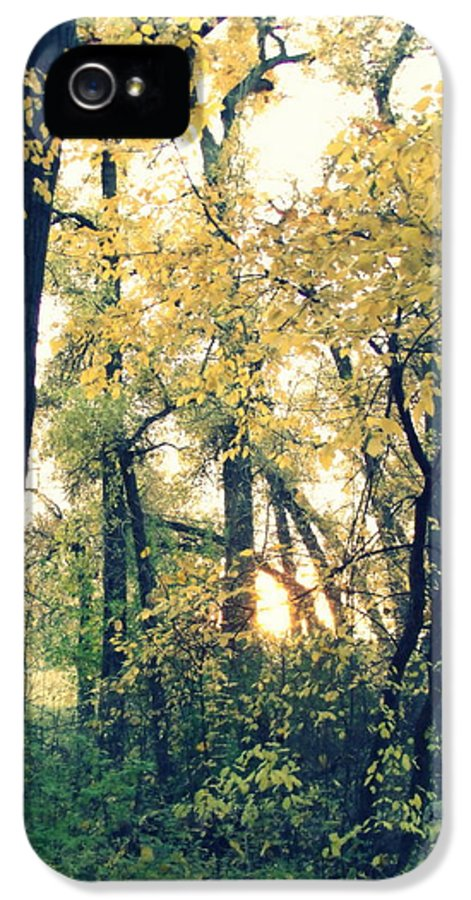 Fall Colors IPhone 5 Case featuring the photograph Autumn Evening by Jessica Myscofski