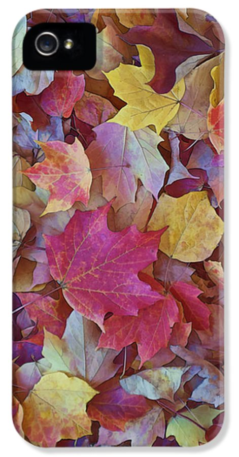 Gregscott IPhone 5 Case featuring the photograph Autumn Maple Leaves - Phone Case by Gregory Scott