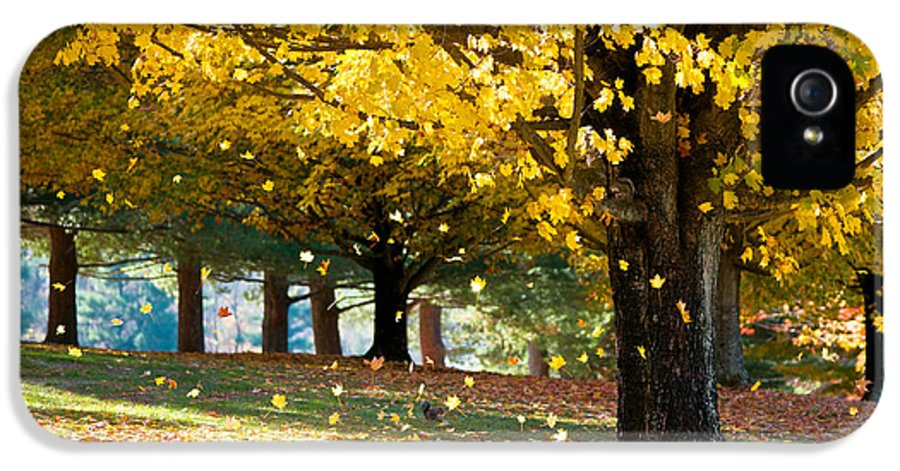 Autumn IPhone 5 Case featuring the photograph Autumn Maple Tree Fall Foliage - Wonderland by Dave Allen