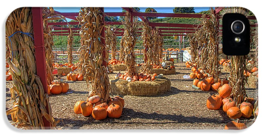Pumpkin IPhone 5 Case featuring the photograph Autumn Pumpkin Patch by Joann Vitali