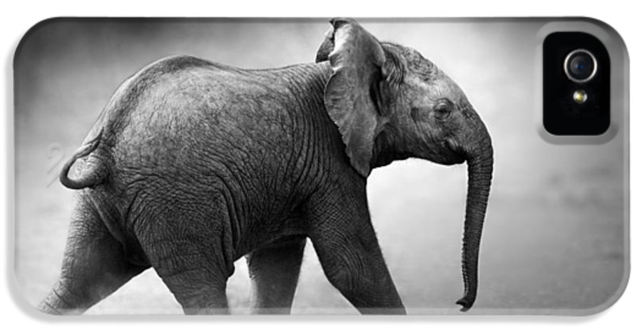 Elephant IPhone 5 Case featuring the photograph Baby Elephant Running by Johan Swanepoel