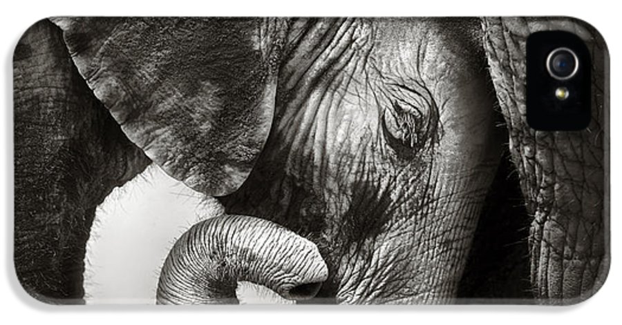 Elephant IPhone 5 Case featuring the photograph Baby Elephant Seeking Comfort by Johan Swanepoel
