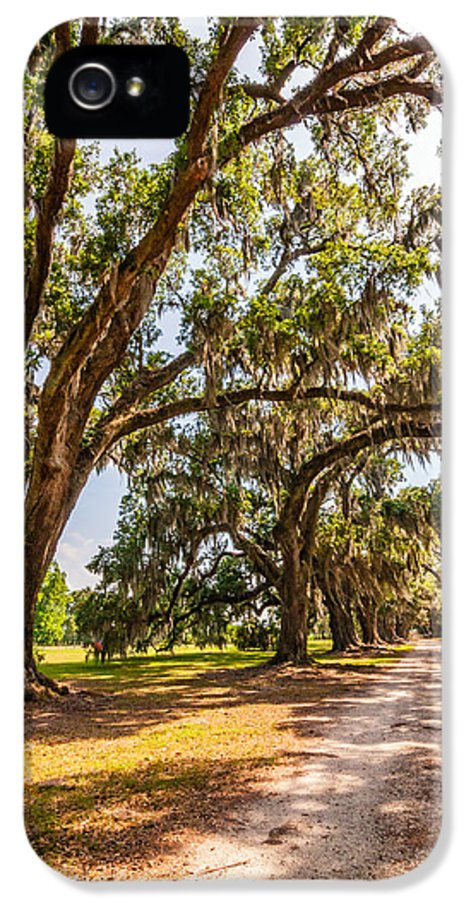 Evergreen Plantation IPhone 5 Case featuring the photograph Back To The Future by Steve Harrington
