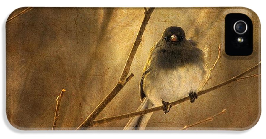 Bird IPhone 5 Case featuring the photograph Backlit Birdie Being Buffeted by Lois Bryan