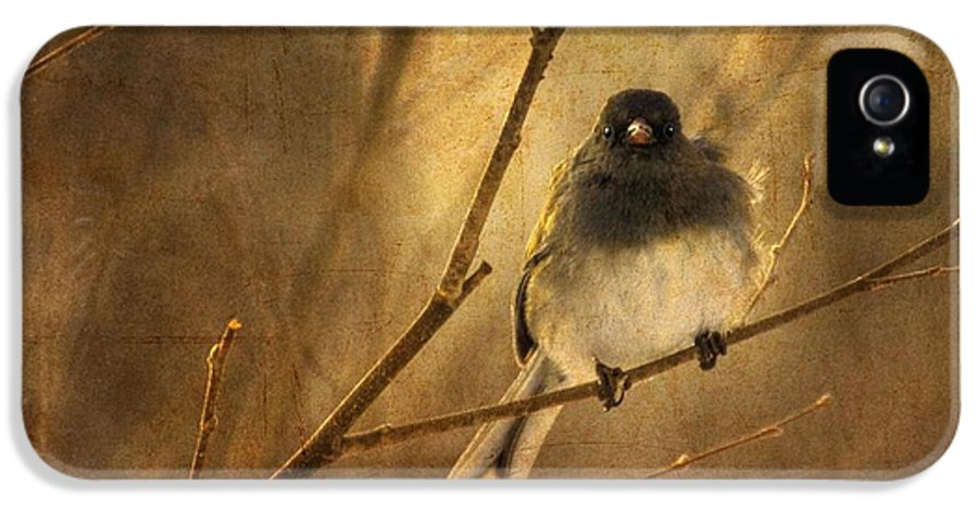 Bird IPhone 5 / 5s Case featuring the photograph Backlit Birdie Being Buffeted by Lois Bryan
