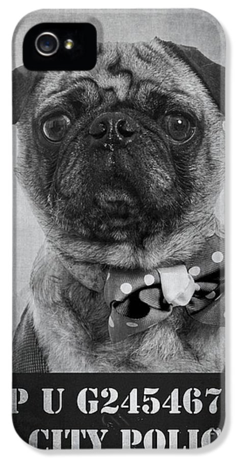 Bad IPhone 5 Case featuring the photograph Bad Dog by Edward Fielding