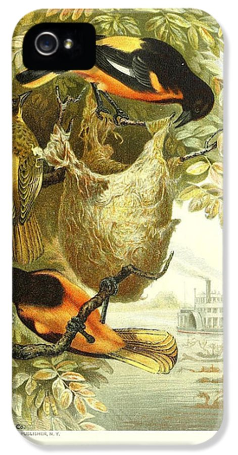 Baltimore IPhone 5 Case featuring the painting Baltimore Orioles by Philip Ralley