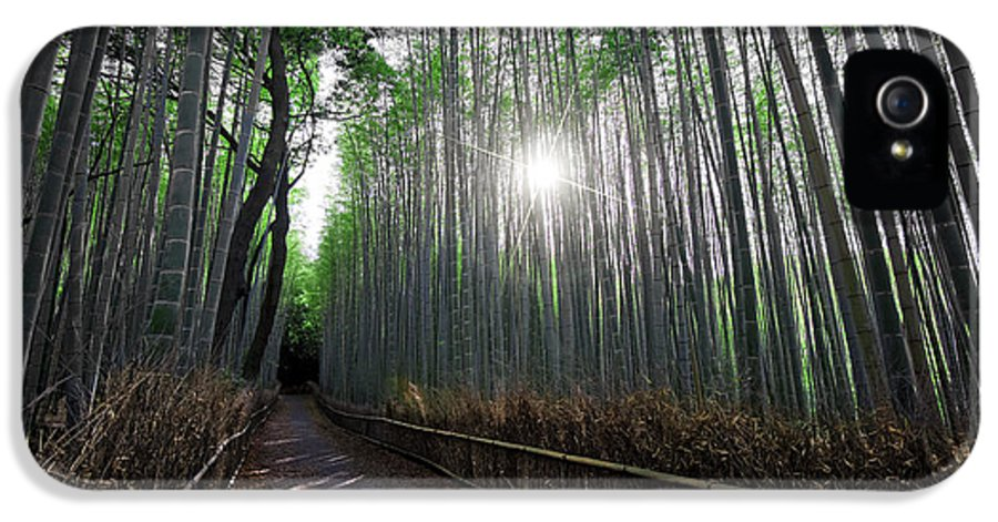 Bamboo IPhone 5 Case featuring the photograph Bamboo Forest Path Of Kyoto by Daniel Hagerman