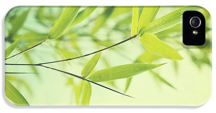 Bamboo IPhone 5 Case featuring the photograph Bamboo In The Sun by Priska Wettstein