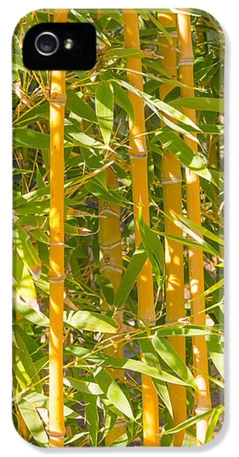 Background IPhone 5 Case featuring the photograph Bamboo Vertical by Christina Rahm