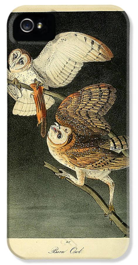 Audubon IPhone 5 Case featuring the painting Barn Owls by Philip Ralley
