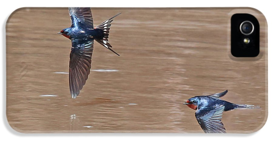 Nature IPhone 5 Case featuring the photograph Barn Swallow In Flight by Mike Dickie