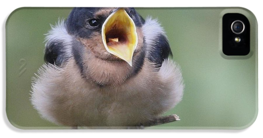 Bird IPhone 5 Case featuring the photograph Barn Swallow by Joe Sweeney