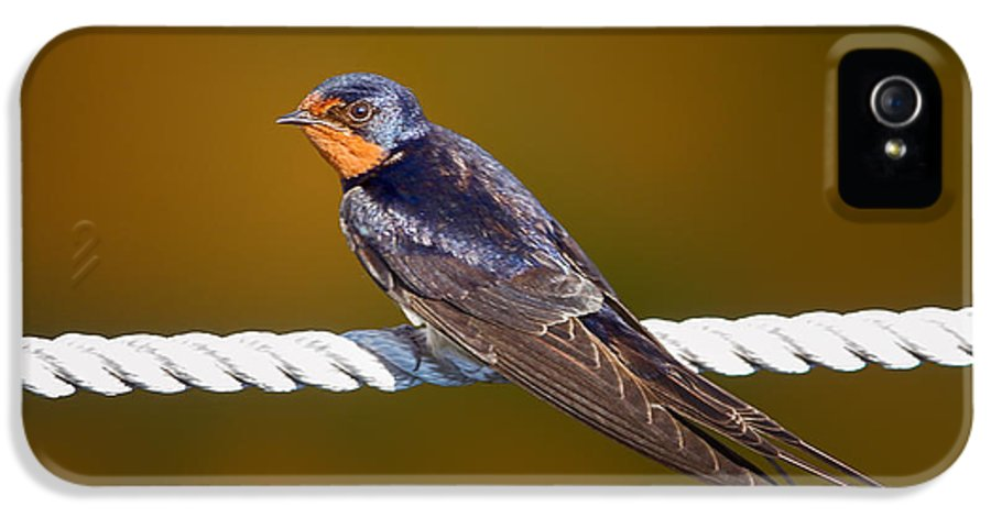 Barn Swallow IPhone 5 Case featuring the photograph Barn Swallow by Todd Bielby