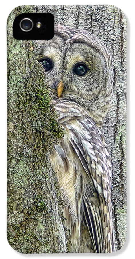 Owl IPhone 5 Case featuring the photograph Barred Owl Peek A Boo by Jennie Marie Schell