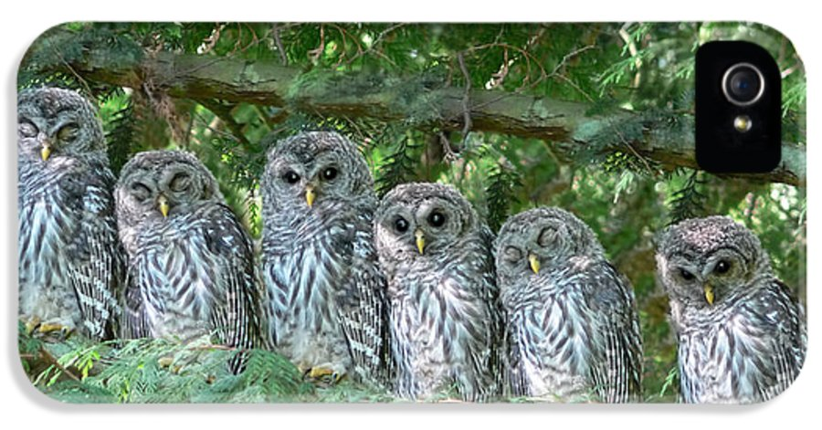 Owl IPhone 5 Case featuring the photograph Barred Owlets Nursery by Jennie Marie Schell